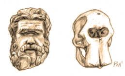 Polifemo e Cranio Elefante