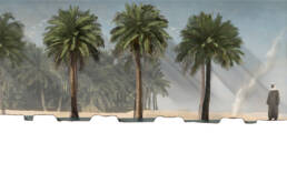 Section 2 Palm Grove